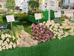 local harvest_green city market